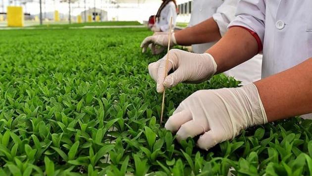 Türkiye'nin tohum üretimi bir milyon tonu aştı